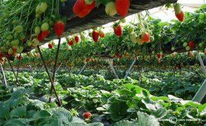 La humidificación para el óptimo crecimiento de plantas