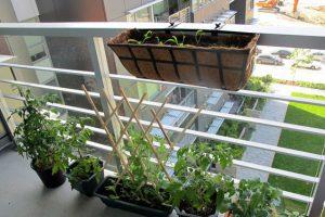 Humidificador para cultivo personal: Aprovechar desperdicios de frutas y verduras para empezar un huerto ecológico sustentable en casa a través de brotes o esquejes