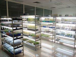 Humidificador industrial para el crecimiento apropiado de champiñones evitando pérdidas de dinero en su distribución